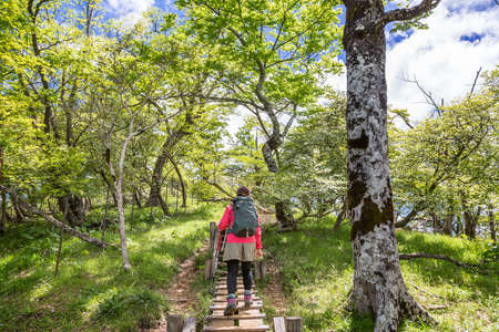 a person who hikes through fresh green mountains