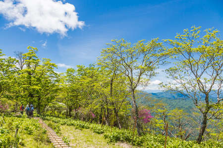 Fresh green forest  trail
