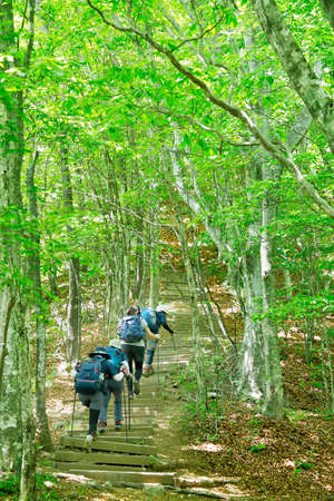 Fresh green trail