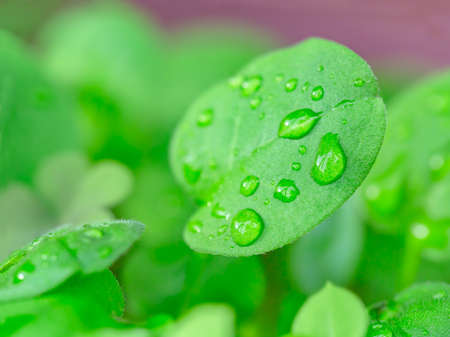 fresh green leaves with water droplets