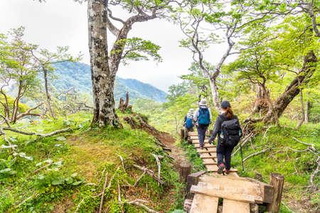 The mountain trail in the fresh green Archivio Fotografico