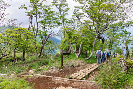 The mountain trail in the fresh green Editoriali
