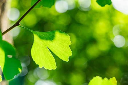 Fresh green tree with sunshine