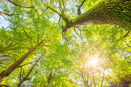A dazzling new book of trees bathed in the sun's light