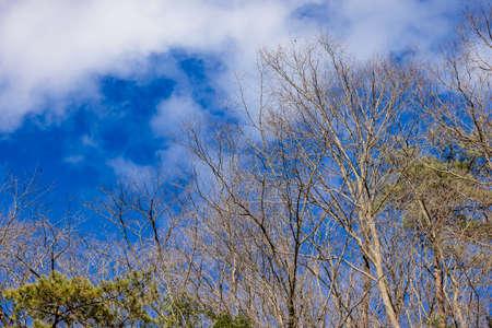Fallen trees, blue skies and clouds Standard-Bild