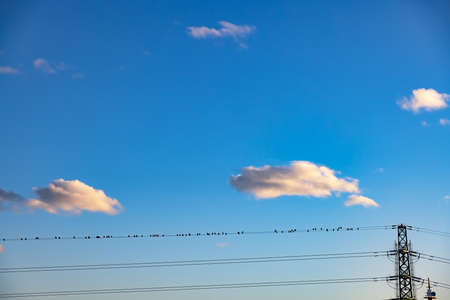 The blue sky at dusk and the many birds that stop at the electric wire Standard-Bild
