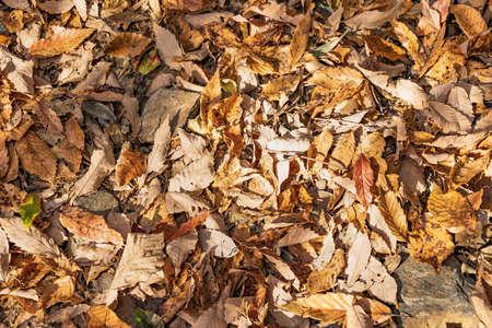 Beautiful fallen leaves in the sun