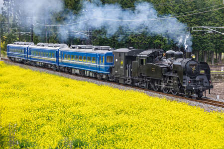 A steam locomotive running next to rape blossoms in full bloom Standard-Bild