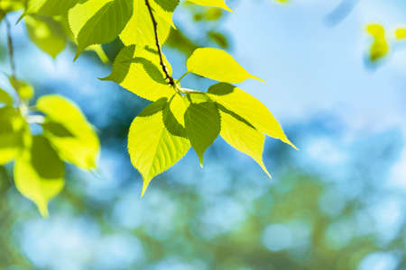 Fresh green trees in spring with vivid colors