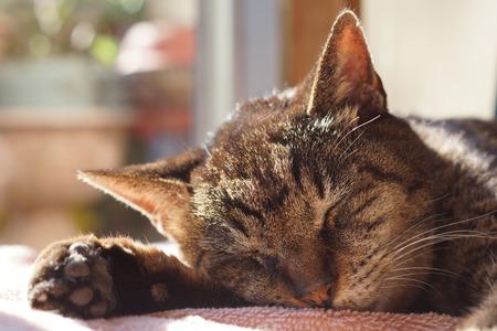 The cat sleeping 版權商用圖片 - 49813467