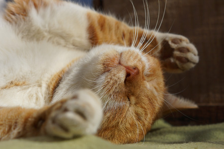 The cat which sleeps 版權商用圖片 - 51062147