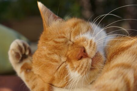 cat grooming: The cat which grooms itself