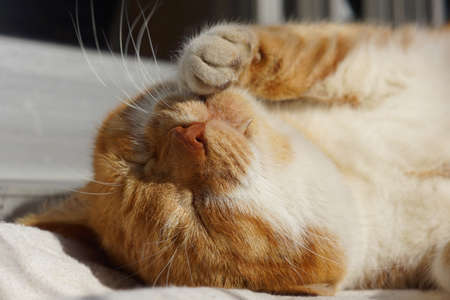 The cat which sleeps 版權商用圖片 - 51294721