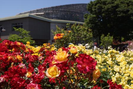 brilliant colors: Rose