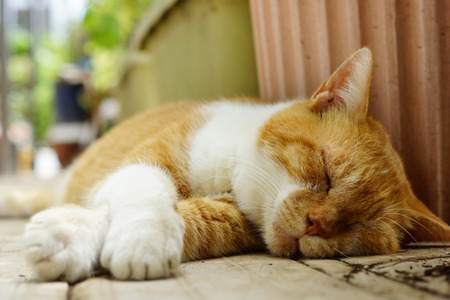 The cat which sleeps 版權商用圖片 - 63515478