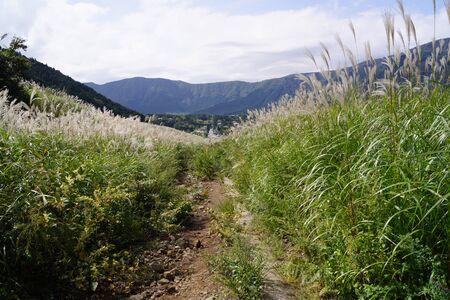 pampas: Sengokuhara Japanese pampas grass prairie