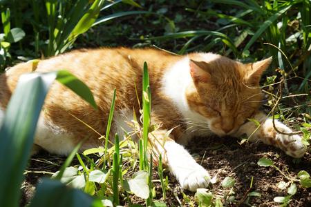 sleeps: The cat which sleeps