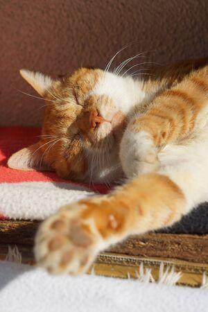 The cat which sleeps 版權商用圖片 - 68406326