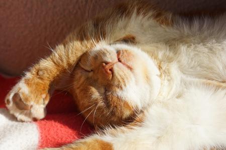 The cat which sleeps 版權商用圖片 - 68406333