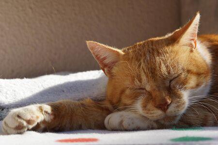 The cat which sleeps 版權商用圖片 - 70337430