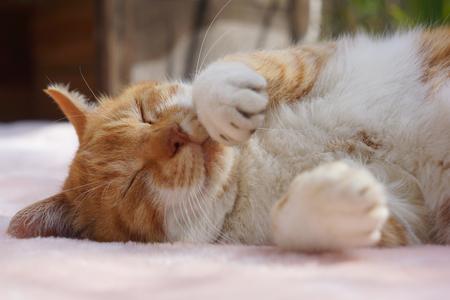 The cat which sleeps 版權商用圖片 - 75020403