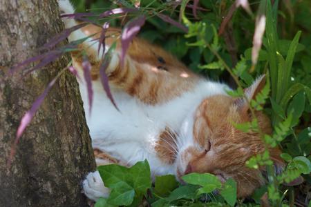 The cat which sleeps 版權商用圖片 - 78049611