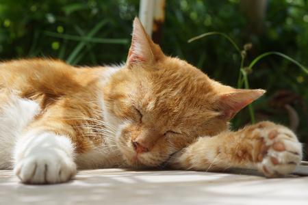 The cat which sleeps 版權商用圖片 - 82995991