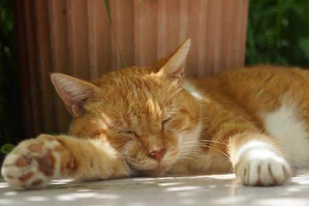 The cat which sleeps 版權商用圖片 - 84336157
