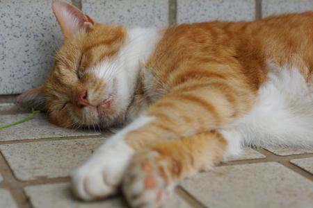 The brown cat which sleeps 版權商用圖片