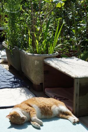 Brown white cat sleeping 版權商用圖片