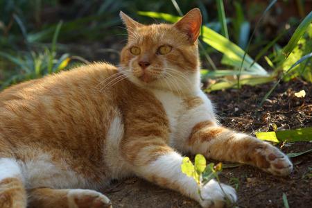 The brown cat relaxing 版權商用圖片 - 113309520