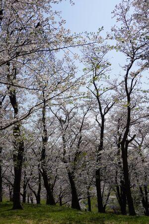 Negishi Forest Park 版權商用圖片 - 144110245