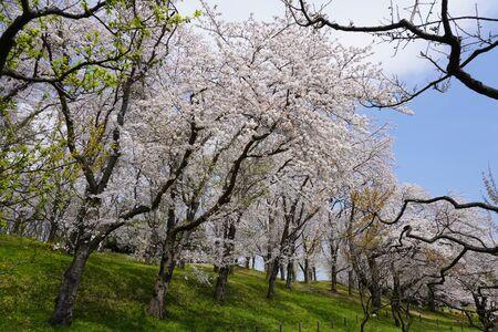 Negishi Forest Park 版權商用圖片 - 144110344