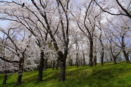 Negishi Forest Park