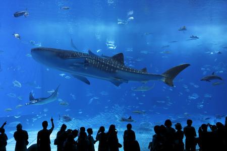 Aquarium raam in Okinawa, Japan