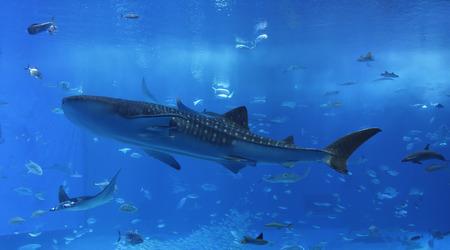 沖縄の水族館の窓 写真素材 - 45602811