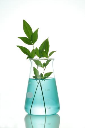 biotecnologia: Biotecnolog�a