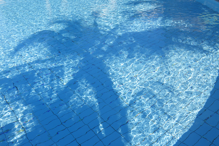 Palm tree with reflection on blue swimming pool