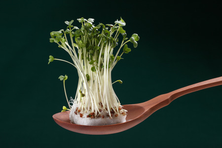 studio shots: Sprout on spoon