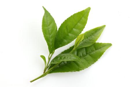 Verse Groene thee bladeren geïsoleerd op wit
