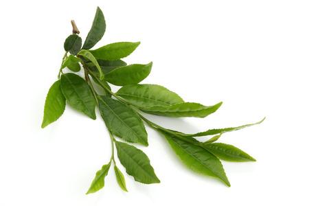 신선한 녹차 잎에 흰색 격리 스톡 콘텐츠