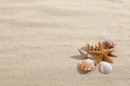 Starfish  Shells with sand as background Stock Photo