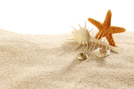 sea shell: Starfish  Shells with sand as background Stock Photo