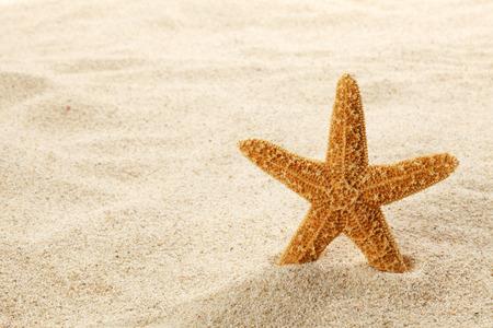 etoile de mer: Starfish dans le sable