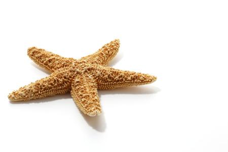 estrella de mar: Estrella de mar aislado en blanco