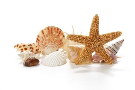 starfish beach: Seashells and starfish on white background