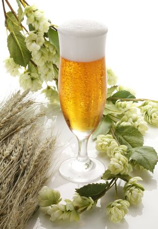 hop plant: Beer and hops and wheat Stock Photo