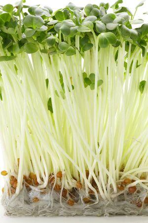 dikon: dikon sprouts