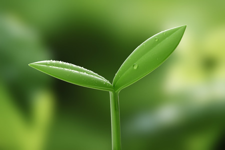 New life. Young sprout in springtime, Closeup. Stock Photo