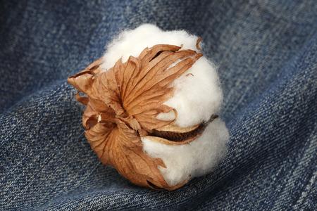 cotton flower: Cotton flower on denim Stock Photo